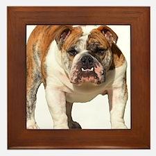 Bulldog Items Framed Tile
