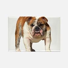 Bulldog Items Rectangle Magnet (100 pack)