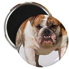 "Bulldog Items 2.25"" Magnet (100 pack)"
