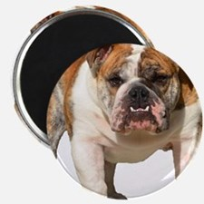 "Bulldog Items 2.25"" Magnet (10 pack)"