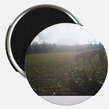 Greyhound Sunset Magnet