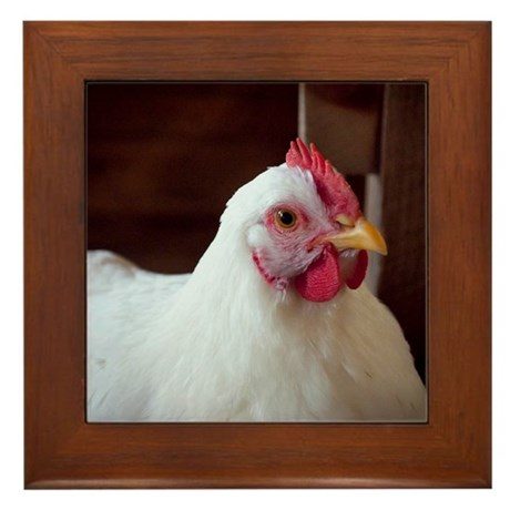 Chicken Framed Tile