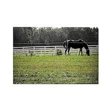 Horse Photo Rectangle Magnet