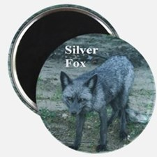 Silver Fox over 50 Magnet
