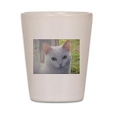 Sugar Kitty Collection Shot Glass