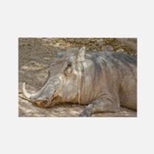Warthog In Repose Rectangle Magnet