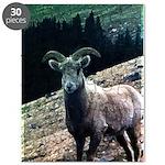 Mountain Sheep Puzzle