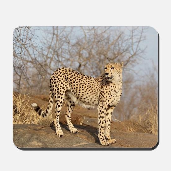 African Cheetah Mousepad