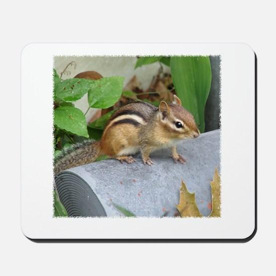 Garden Bandit Mousepad