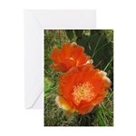 Prickly Pear Blooms Cards (Pk of 10)