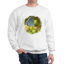 Little Blue Butterfly Sweatshirt
