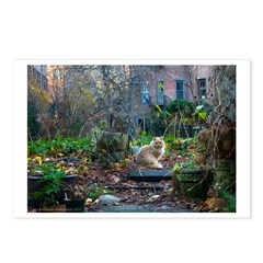 Autumn yard with cat Postcards (Package of 8)
