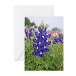 Texas Bluebonnets Greeting Cards (Pk of 20)