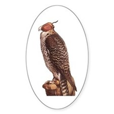 Holbein's Falcon Oval Decal
