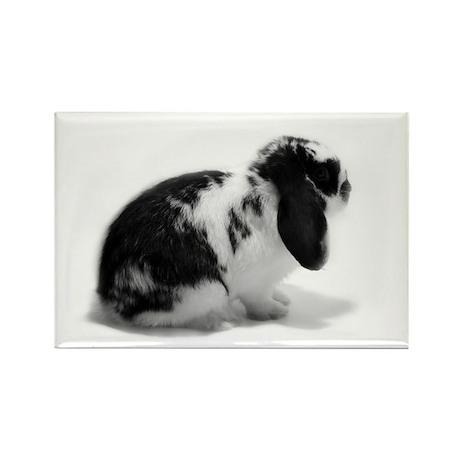 Holland Lop Rabbit - Broken B Rectangle Magnet