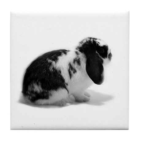 Holland Lop Rabbit - Broken B Tile Coaster