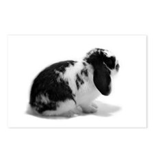 Holland Lop Rabbit - Broken B Postcards (Package o