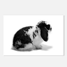 Holland Lop Rabbit - Broken B Postcards (Package o