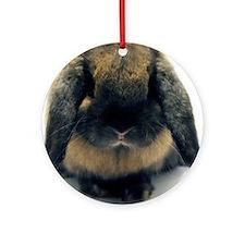 Holland Lop Rabbit Tort Ornament (Round)