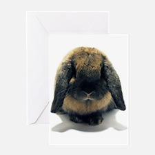 Holland Lop Rabbit Tort Greeting Card