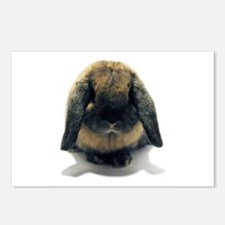Holland Lop Rabbit Tort Postcards (Package of 8)