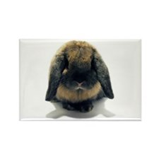 Holland Lop Rabbit Tort Rectangle Magnet