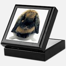 Holland Lop Rabbit Tort Keepsake Box