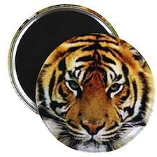 """Tiger Photo 2.25"""" Magnet (10 pack)"""