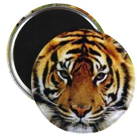 Tiger Photo Magnet