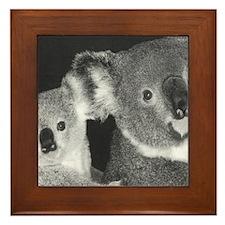 Koalas Framed Tile