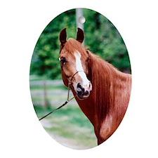 Scarlet Elegance Arabian mare Ornament (Oval)