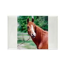 Scarlet Elegance Arabian mare Rectangle Magnet