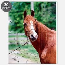 Scarlet Elegance Arabian mare Puzzle
