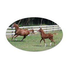 Arabian Mare and Foal 22x14 Oval Wall Peel