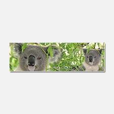 Helaine's Koala Bear Car Magnet 10 x 3