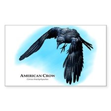 American Crow Decal