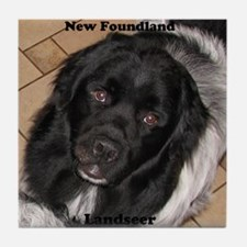 Male Newfie Landseer Tile Coaster