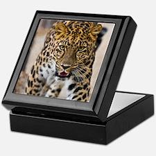 Leopard Running Photograph Keepsake Box