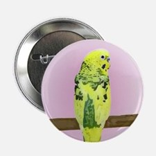 Pied Budgie Button