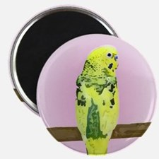 Pied Budgie Magnet