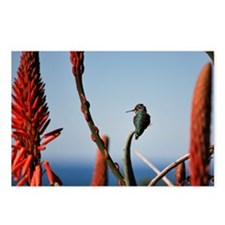 Unique Agaves Postcards (Package of 8)