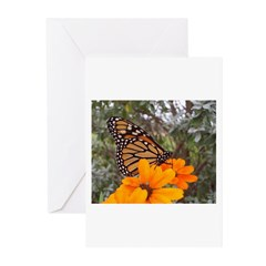 Beautiful Monarch Greeting Cards (Pk of 10)