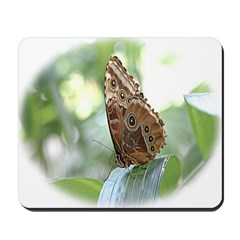 Did someone mention Butterfli Mousepad