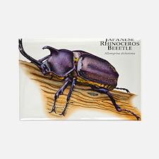 Japanese Rhinoceros Beetle Rectangle Magnet