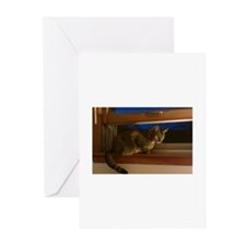 Cute Kitteh Greeting Cards (Pk of 10)