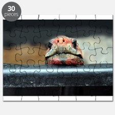 Curious Red Foot Tortoise Puzzle