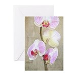 Orchid Flowers Greeting Cards (Pk of 10)