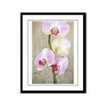 Orchid Flowers Framed Panel Print