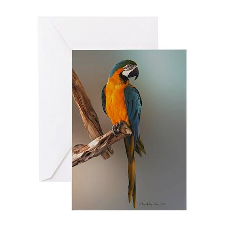 Blue & Gold Macaw birthday Card