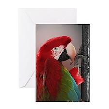 Greenwing Macaw Greeting Card